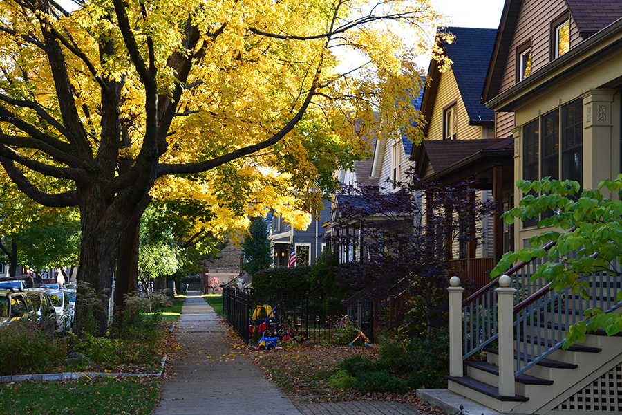 Illinois - Fall Colors of a Tree-Lined Street in a Residential Neighborhood Outside of Chicago